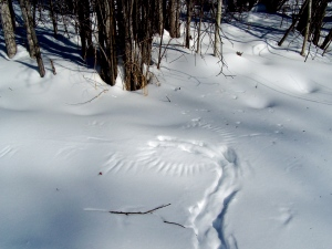 owl-prints-in-snow