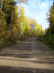 fall trees hutch lake