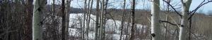 winter trees banner