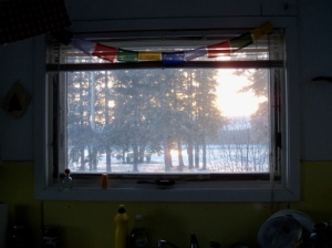 The view out my main kitchen window. The river bank is right there!