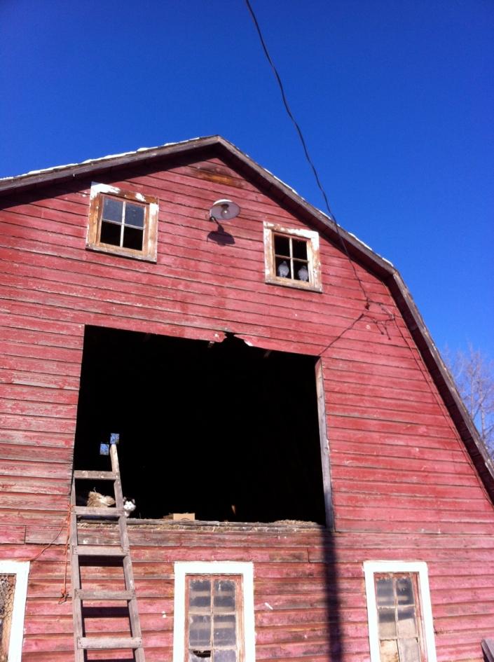 Stella in the hayloft